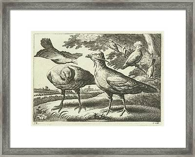 Geese And A Cockatoo, Pieter Van Lisebetten Framed Print by Pieter Van Lisebetten And Wenceslaus Hollar And Francis Barlow