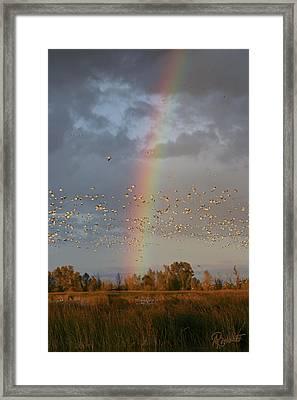 Geese And Rainbow Framed Print