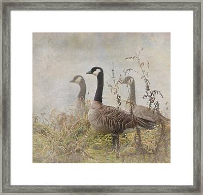 Geese Framed Print by Angie Vogel