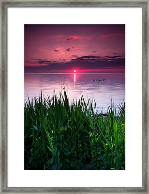 Geese At Sunrise Framed Print by Cale Best