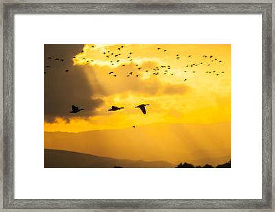 Geese At Sunset-2 Framed Print