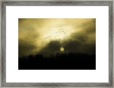 Geese At Sunset Framed Print