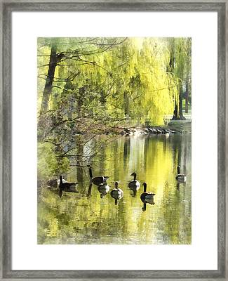 Geese By Willow Framed Print