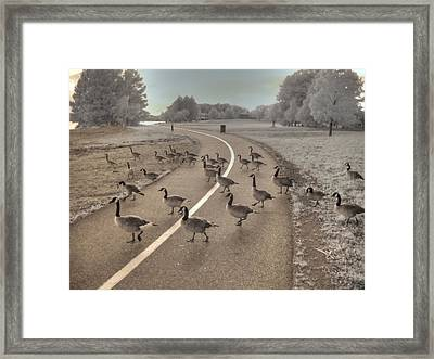 Geese Crossing Framed Print by Jane Linders