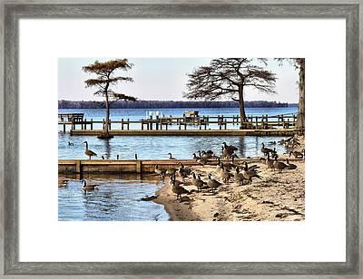 Geese Everywhere Framed Print by Carolyn Ricks
