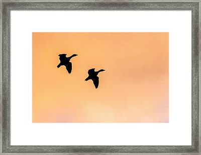Geese Flying, Bosque Del Apache Framed Print by Maresa Pryor
