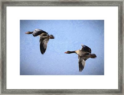 Geese Flying Framed Print