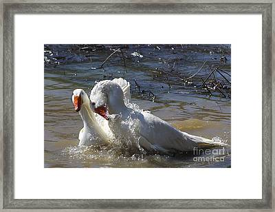 Geese  Framed Print by Giovanni Chianese