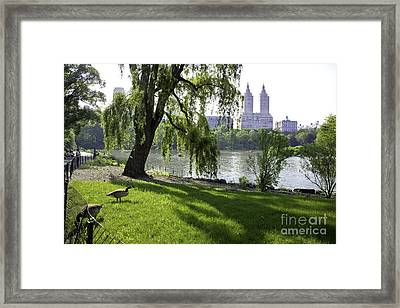 Geese In Central Park Nyc Framed Print