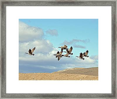 Framed Print featuring the photograph Geese In Flight by Lula Adams