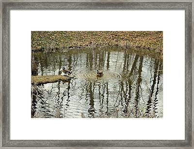 Geese In Small Pond Framed Print by Bob Gross