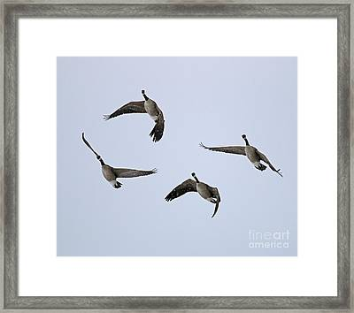 Geese In Snow 1909 Framed Print by Jack Schultz
