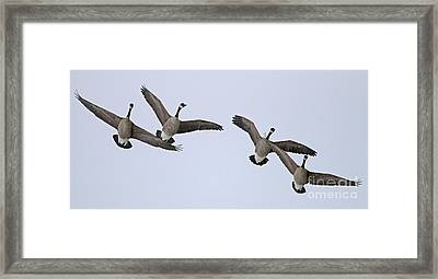 Geese In Snow 1915 Framed Print by Jack Schultz