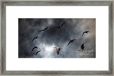 Geese In Solar Eclips Framed Print