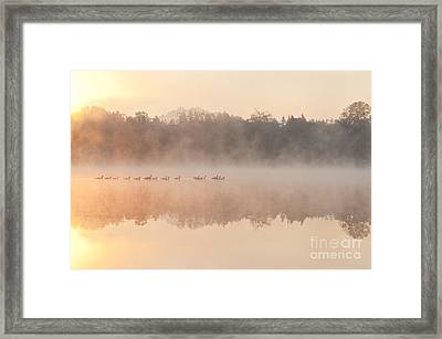 Geese In Sunrise And Fog, Lake Cassidy Framed Print by Jim Corwin