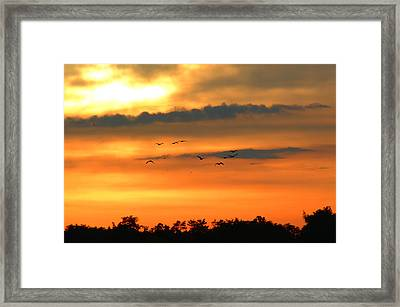 Geese Into The Sunset Framed Print