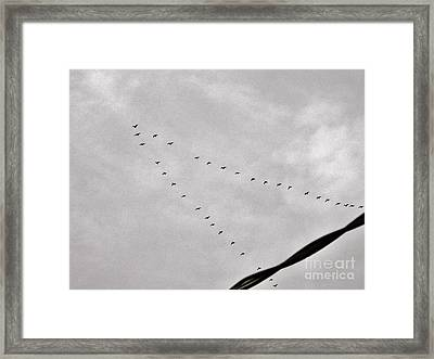 Geese Framed Print by Judy Via-Wolff