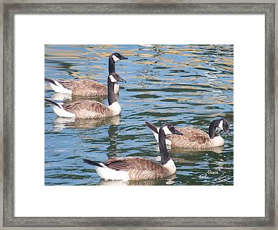 Geese  Framed Print by Julie Grace