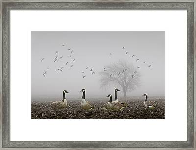Geese On A Foggy Morning Framed Print by Randall Nyhof