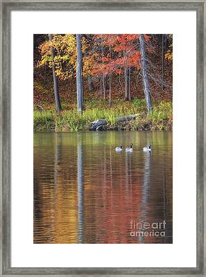 Geese On Beebe Lake Framed Print by Michele Steffey
