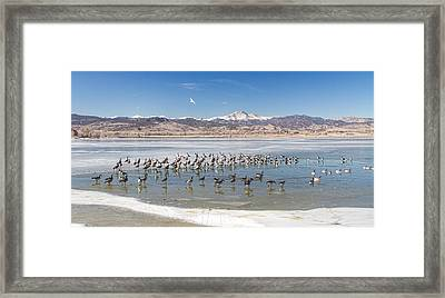 Geese On Ice  Framed Print by James BO  Insogna