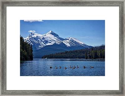 Geese On Maligne Lake - Jasper Framed Print