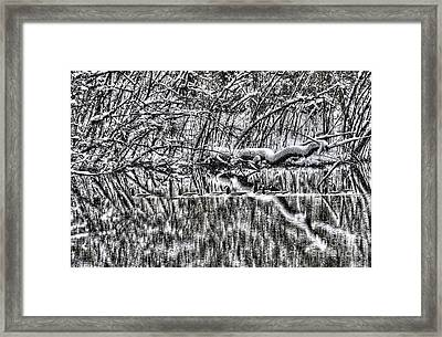 Geese On Pond Black And Wihite Framed Print by Dan Friend