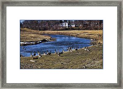 Framed Print featuring the photograph Geese On The Creek by Jim Lepard