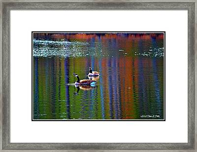 Framed Print featuring the photograph Geese On The Lake by Tara Potts