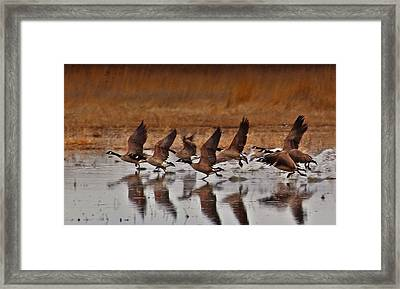 Framed Print featuring the photograph Geese On The Run by Lynn Hopwood