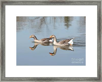 Geese On The Yakima River  Framed Print