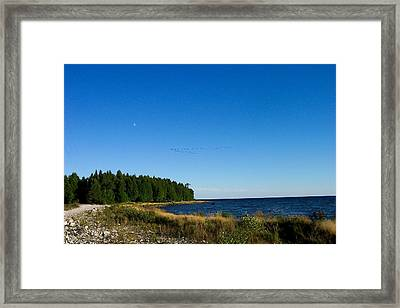 Geese Over Cana Island Framed Print by Pamela Schreckengost