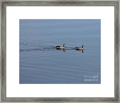 Geese Reflected Framed Print by Leone Lund