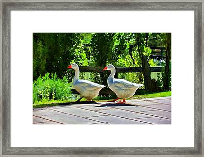 Framed Print featuring the photograph Geese Strolling In The Garden by Tracie Kaska