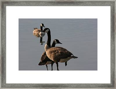 Framed Print featuring the photograph Geese Twister by Paula Brown
