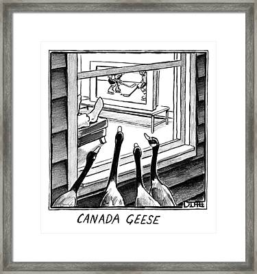 Geese Watching Hockey From A Window Framed Print by Matthew Diffee