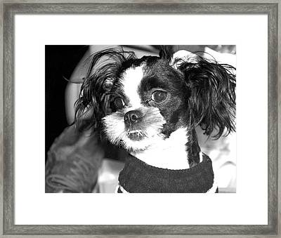 Geez Mom Nothing Happened............. Framed Print by Antonia Citrino