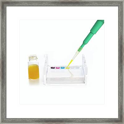 Gel Electrophoresis Framed Print by Science Photo Library
