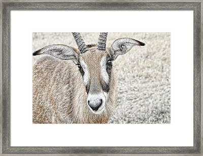 Framed Print featuring the photograph Young Oryx by Dyle   Warren