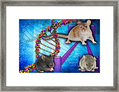 Gene Expression In Mice Framed Print by Science Source