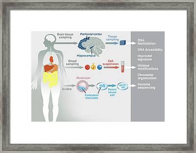 Gene Therapy Processes Framed Print by Jose Antonio Pe�as