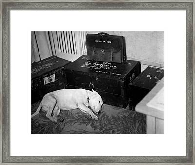 General Georg Pattons Pet Bull Terrier Framed Print