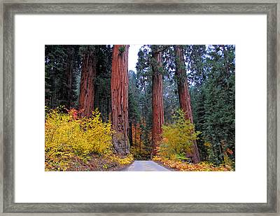 Framed Print featuring the photograph General's Highway by Lynn Bauer
