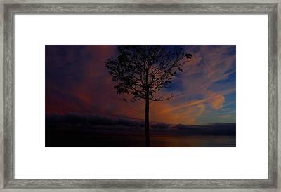 Genesis Tree Framed Print by Stephen Melcher