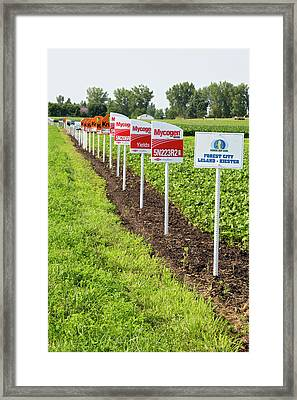 Genetically Modified Crop Signs Framed Print