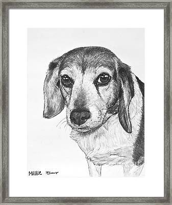 Gentle Beagle Framed Print