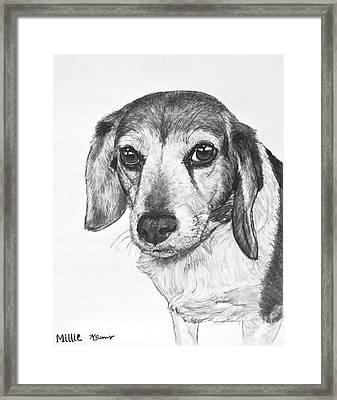 Gentle Beagle Framed Print by Kate Sumners