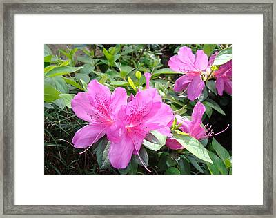 Gentle Beauty Framed Print by Van Ness