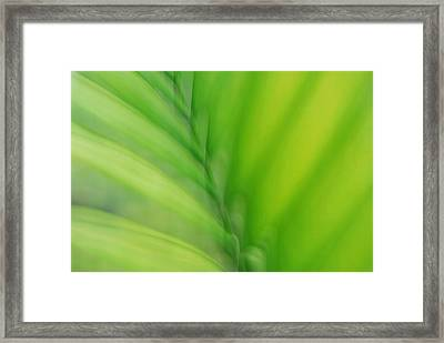 Framed Print featuring the photograph Gentle Breeze by Lorenzo Cassina