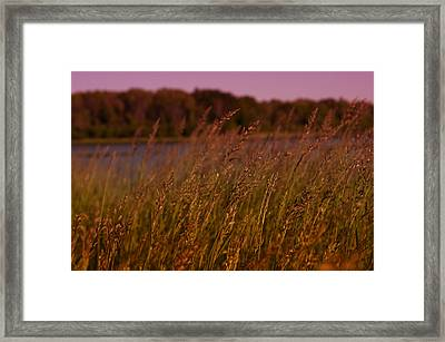 Gentle Breeze Framed Print by Miguel Winterpacht